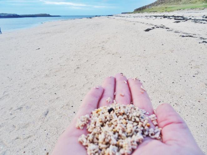 coral-beach-sand